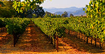 Napa Valley Honeymoon Planning With AAA Travel Agency